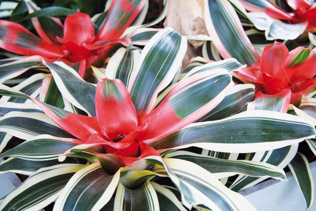 10 osvedčených rastlín do zimnej záhrady