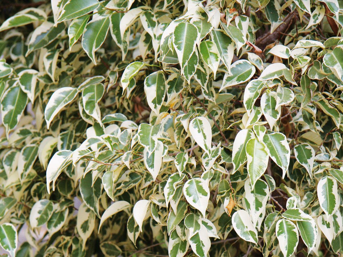 Vzrastenejšie XXL izbové rastliny, najmä husto olistené jedince, sú na bujnenie vzimnej záhrade priam ideálne.