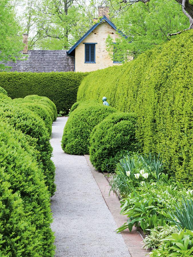 Vždyzelený krušpán (Buxus sempervirens) je atraktívny po celý rok, je vhodný na tvorbu nižších až stredne vysokých živých plotov do výšky 1,5 m. Jeho nevýhodou je pomalší rast. Na 1 m sa vysádza približne 6 ks rastlín. V posledných rokoch trpí inváziou agresívneho škodcu – vijačky krušpánovej, ktorá dokáže v priebehu niekoľkých dní zlikvidovať celý porast. Preto treba byť ostražitý a počítať s tým, že v prípade potreby bude nutné použiť chemickú ochranu.