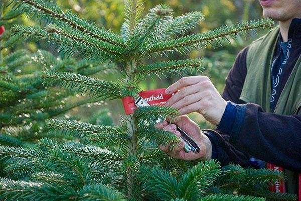 Každý strom prešiel prísnou kontrolou špecializovaných inšpektorov.