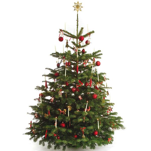 Kaukazská jedľa – vzor krásy pre každý vianočný strom.