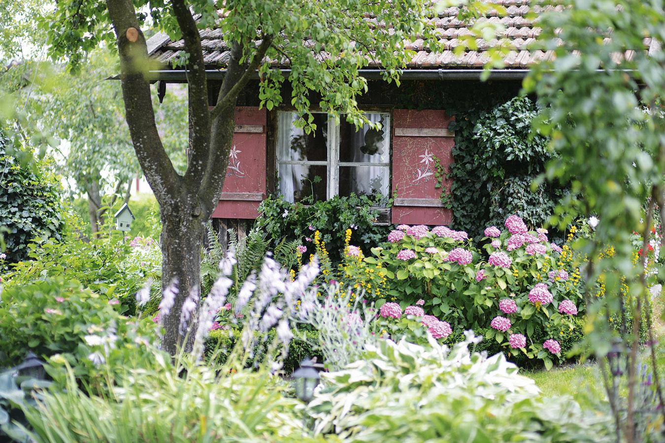 Nebojte sa farieb Niekedy sa pri troche kreativity môže aj zo starej ošarpanej kôlne stať ukážková záhradná stavba. Farby a rovnako aj rastliny dokážu skutočné divy. Drobné nedostatky zamaskujú a pohľady odpútajú rozložitejšie a bohatšie kvitnúce rastliny, napríklad hortenzie, popínavý brečtan a papraďorasty, ktorým sa darí v polotieni.