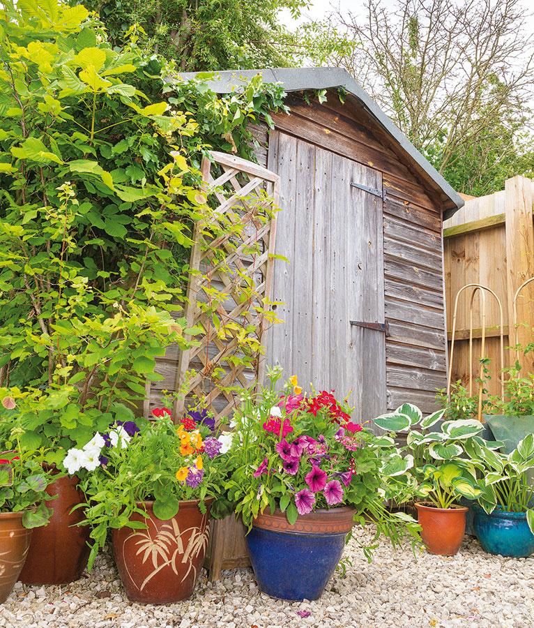"""Rýchla pomoc Popínavé a kvitnúce rastliny v nádobách sú rýchle a účinné pri kamuflovaní záhradného domčeka, keď je záhrada ešte len v """"plienkach"""" a na bujnú vegetáciu treba čakať."""