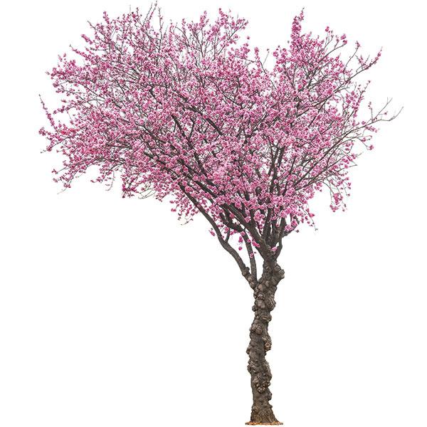 Stromy sú zdrojom energie azároveň poskytujú blahodarný tieň.