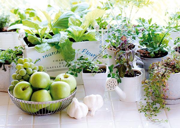 Vytvorte si v kuchyni bylinkovú minizáhradku