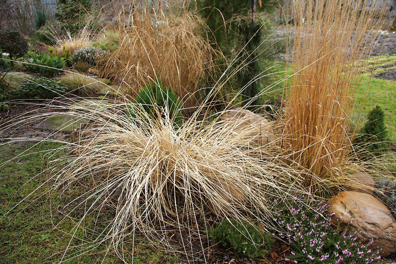 Koncom jesene azačiatkom zimy je potrebné skontrolovať, či sú všetky na chlad citlivejšie rastliny vzáhrade, na terasách abalkónoch dôkladne zazimované.
