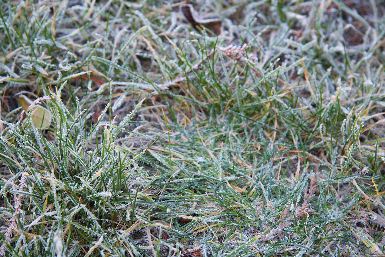 Vdňoch, keď mrzne, sa odporúča nevstupovať na trávnik, ato ani vtedy, ak je pokrytý snehom (platí to najmä pre dospelých).