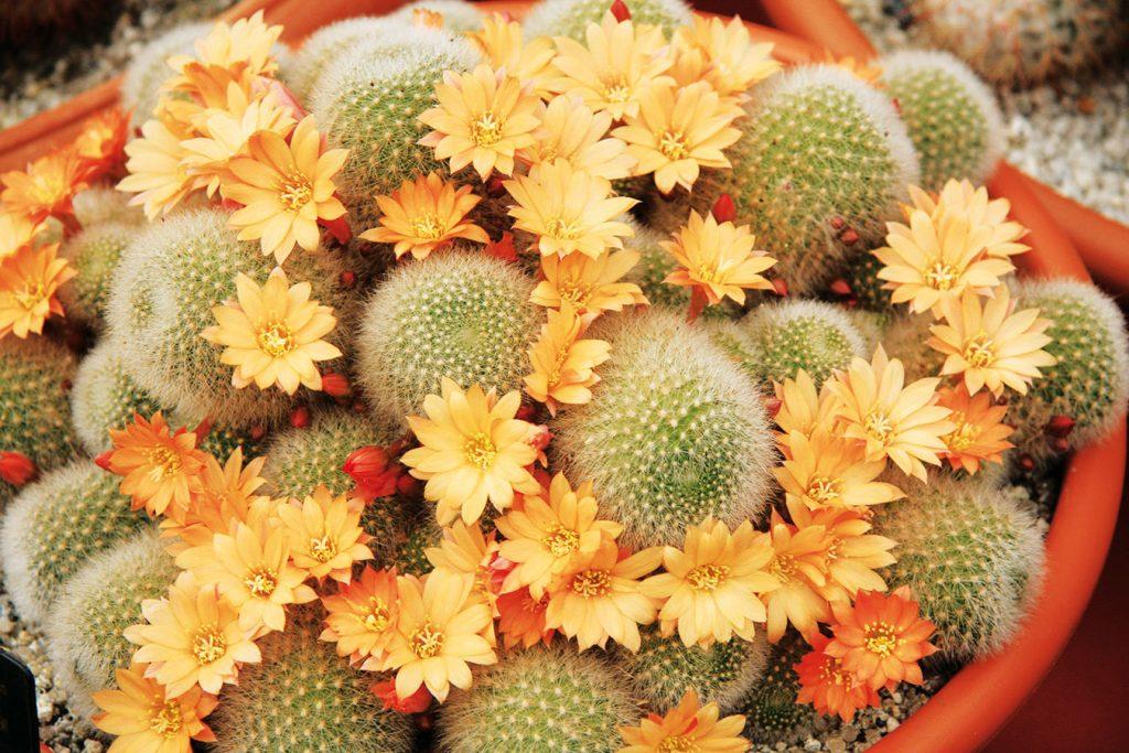 10 najzaujímavejších kaktusov a sukulentov, ktoré môžete doma pestovať