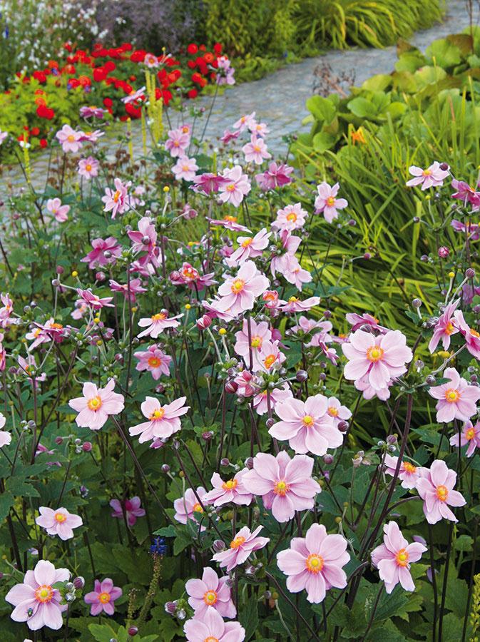 Rastliny vždy vyberajte podľa podmienok daného miesta, štýlu záhrady, náročnosti na starostlivosť afarebnosti. Dobrou pomôckou je, ak si zakreslíte ich rozmiestnenie na papier azohľadníte pritom rozmery rastlín (najmä drevín) vdospelosti. Myslieť treba na trávnik (ak sa rozhodnete pre ten kobercový, je dobré vopred si ho objednať), kostrovú zeleň (stromy akry), živé ploty, skalky, vresoviská, kvetinové záhony, deliace steny aj treláže. Ideálnym riešením je postupne si vytvoriť nákupný zoznam (aj spribližnými množstvami) aaž sním potom zájsť do záhradného centra (ideálne je nakupovať vapríli amáji, keď je ponuka najširšia). Rastliny vždy vyberajte tak, aby bola záhrada farebne aj tvarovo rozmanitá aceloročne atraktívna. Nezabudnite na to, že potrvá niekoľko rokov, kým sa ukáže vplnej kráse.