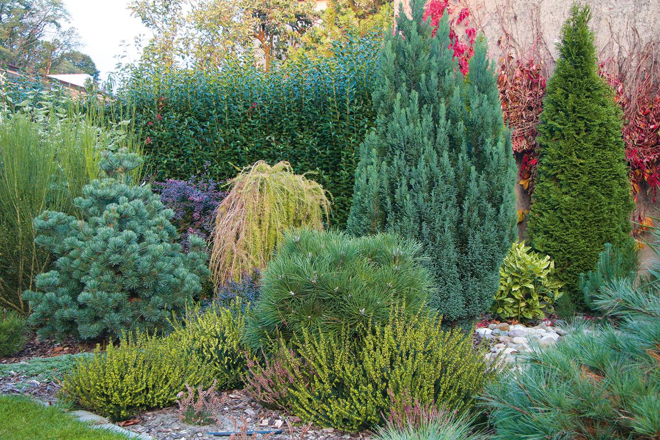 Pri plánovaní záhrady treba myslieť aj na to, koľko času jej budete môcť venovať. Aj tá najmenšia si totiž vyžaduje aspoň malú pozornosť, naozaj bezúdržbová záhrada neexistuje. Na pravidelnú údržbu sú najmenej náročné vždyzelené kry, ihličnany (najmä miniatúrne) aokrasné trávy. Platí, že viac pozornosti si vyžadujú skalky, oveľa menej náročné sú vresoviská. Určitý čas zaberie aj starostlivosť ojazierka, umelé potoky akvetinové (najmä letničkové) záhony. Ak túžite po peknom trávniku, budete sa mu musieť venovať takmer celý rok. Živé ploty zasa potrebujú pravidelný rez, inak nebudú pôsobiť esteticky. Viac starostlivosti treba venovať ružiam, menej bylinkovým záhonom, pôdopokryvným drevinám atrvalkám.