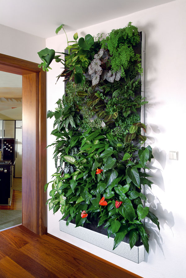 Vegetačná stena
