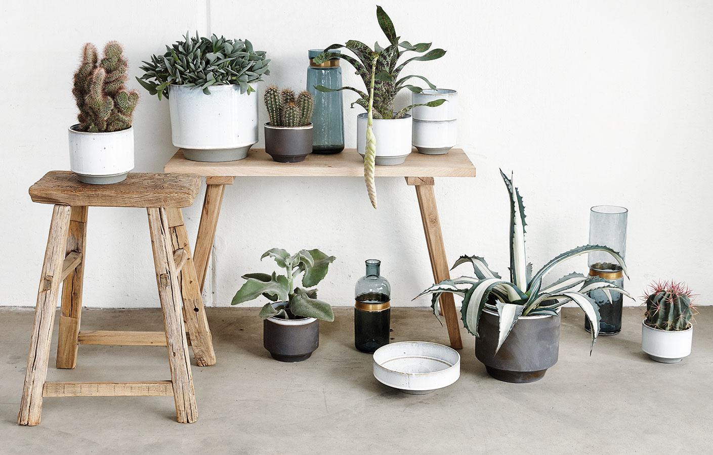 Kaktusy asukulenty sú výbornou voľbou najmä do teplých svetlých obývacích izieb so suchým vzduchom. Prím hrajú vsúčasnosti najmä vmoderných interiéroch. Vponuke nájdete naozaj široké spektrum druhov. Vyhradiť im môžete napríklad jeden samostatný stolček, na ktorom pekne vyniknú.