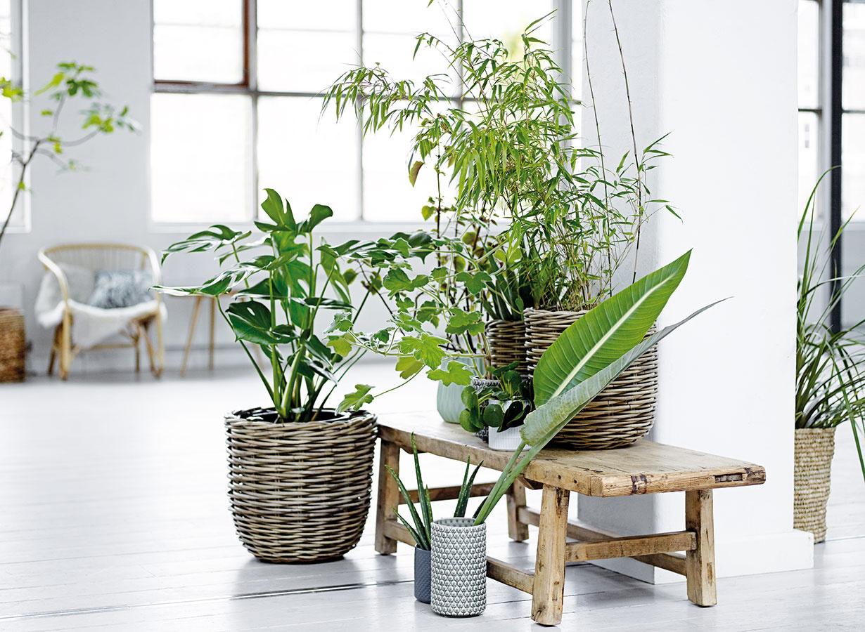 Stredne vysoké anižšie rastliny sústreďte do menších alebo väčších skupiniek. Platí, že ich  kvetináče aobalové nádoby by mali vychádzať zo štýlu, vktorom je daná miestnosť zariadená. Peknou kombináciou nielen do modernej obývacej izby je prútie akeramika vnenápadných farbách.