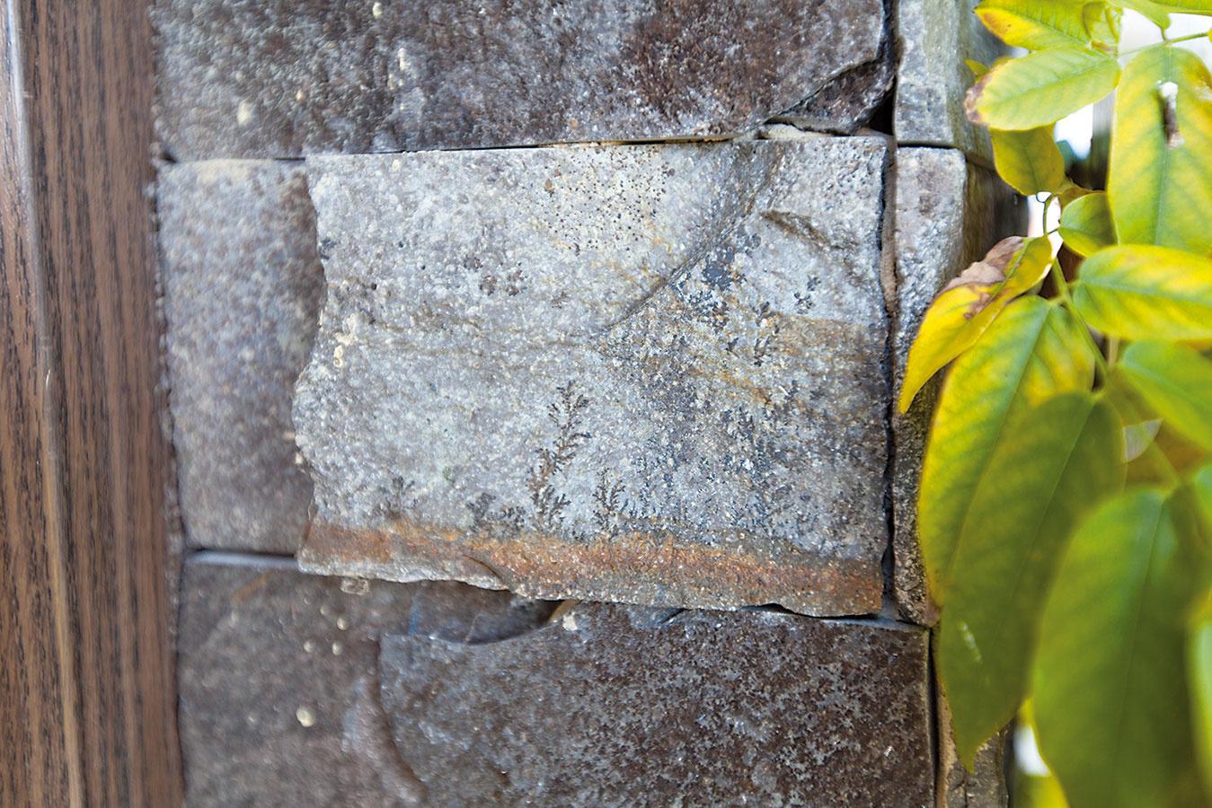 Radosť skrytá vdetailoch. Domáci sa každý deň tešia zdomu, zo záhrady aj zdrobností, ktoré prináša okolitá príroda – zblízkosti operencov či odtlačkov pravekých prasličiek zakliatych vkamennom obklade.