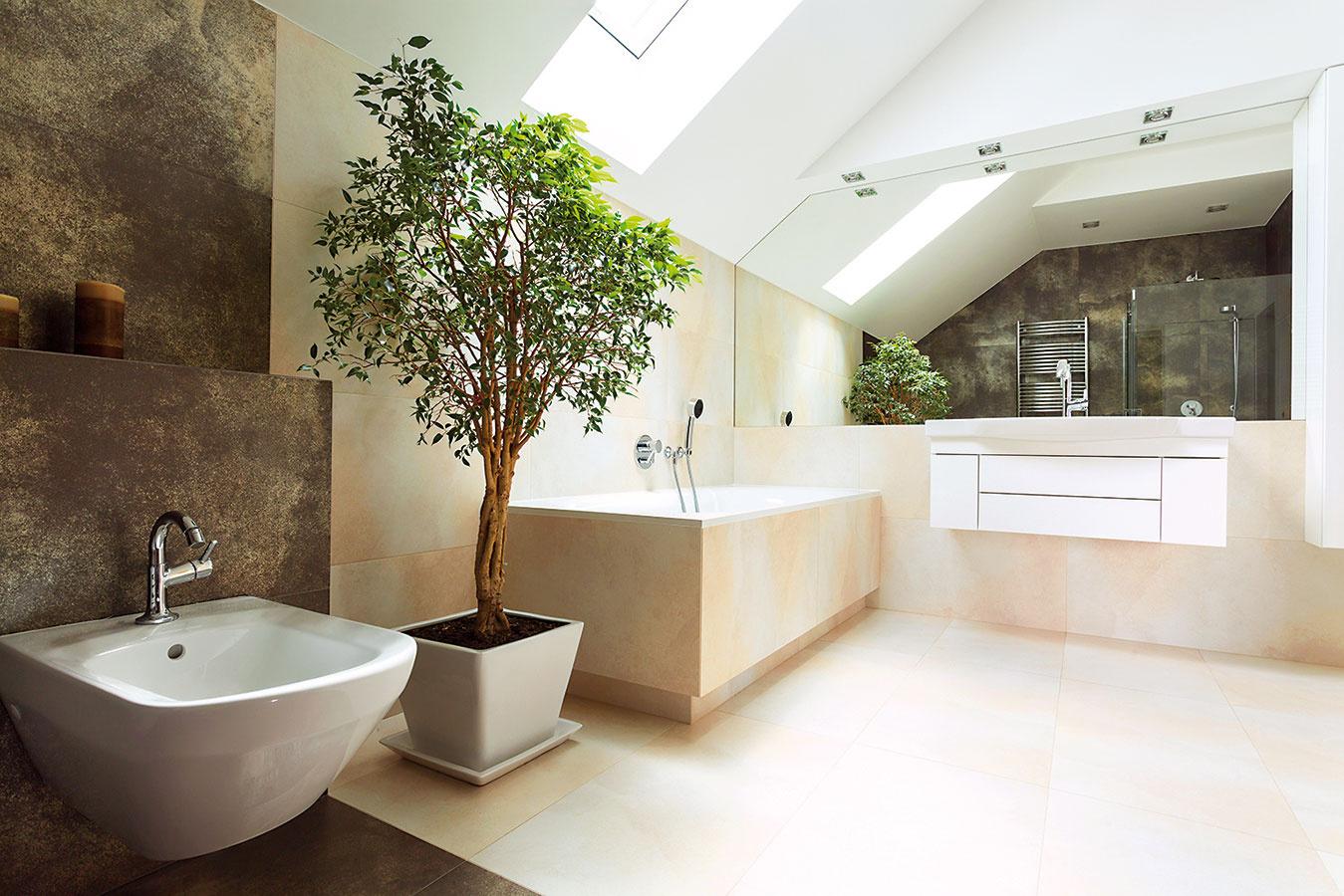 Výberu obalovej nádoby venujte náležitú pozornosť. Vždy by sa mala niesť vpodobnom duchu ako zvyšok kúpeľne. Veľkosť nádoby vždy prispôsobte veľkosti rastliny, ak nepostačuje, rastlinu určite presaďte.