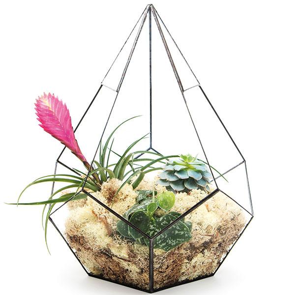 Kvetinové teráriá Vytvorte si doma malú záhradku s teráriami od Urban Botanist. Elegantné riešenie pre každý interiér. Pestovať v nich môžete nielen sukuletny, ale napríklad aj orchidey. Predáva Bonami.
