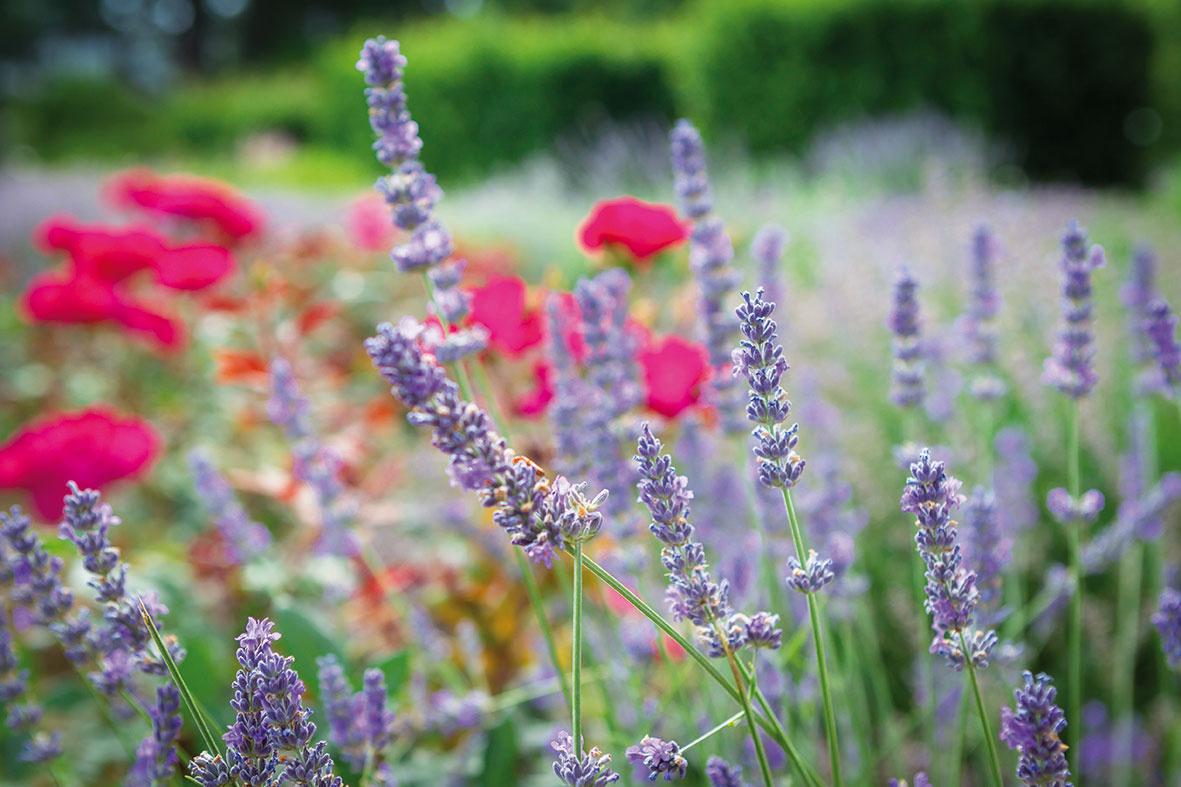 Nič sa nepokazí, ak sa medzi kvety zakomponujú bylinky. Momentálne je trendové pridať zeleninu, ktorá sa vyznačuje nápadnou farebnosťou.