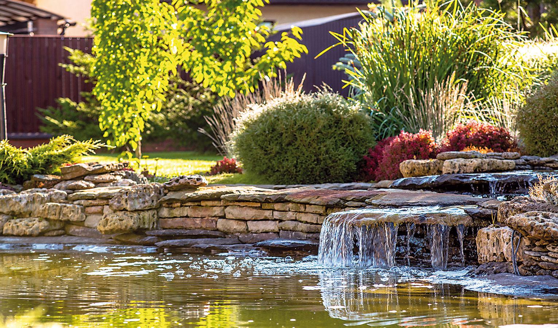 Základom pekného jazierka je výber vhodných druhov anákup zdravých rastlín. Jazierka (najmä tie menšie) nie je dobré prepchávať množstvom rastlín – jedna tretina vodnej plochy musí zostať voľná. Oveľa lepšie riešenie je vybrať menší počet rastlinných druhov azkaždého použiť viacero jedincov (aspoň tri na 1 m2).