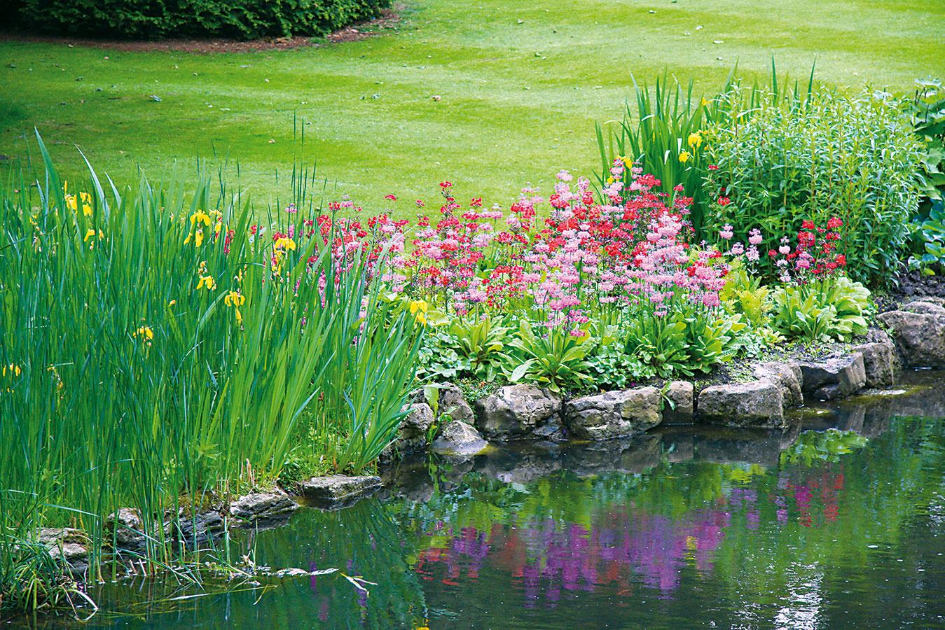 Ovysadenú pobrežnú avodnú zeleň sa treba vhodne postarať. Vo väčšine prípadov nevyžadujú tieto rastliny toľko zásahov ako bežná záhradná zeleň – základom úspechu je pravidelná kontrola audržiavanie rastlín vrozumných rozmeroch.