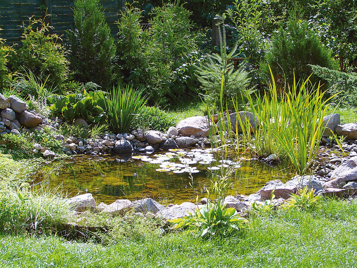 Kjazierkam aumelým vodným plochám patrí aj decentné pozadie, vďaka ktorému pôsobia prirodzenejšie ako vprípade, keď sú situované na rovine aobkolesené iba nižšími rastlinami. Pozadie môže mať rôzne podoby.