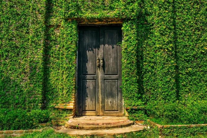Staré tehlové múry obrastené popínavými rastlinami. Aj to je obraz vidieckej záhrady.
