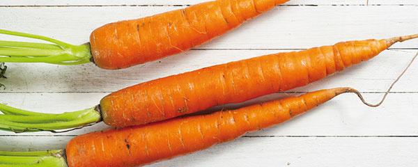MRKVA AKOREŇOVÁ ZELENINA vyžaduje chlad anižšiu vlhkosť vzduchu. Preto jej pri krátkodobom skladovaní odkrojte listy astonky, vložte ju do plastovej dózičky sodvetrávaním auložte ju do chladničky. Mrkvu sa neodporúča ukladať vedľa ovocia sveľkým množstvom etylénu, inak zhorkne.
