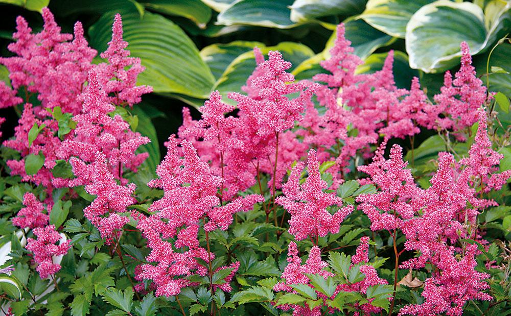 Ako sa starať o vysadené rastliny, aby nám záhrada pekne rozkvitla