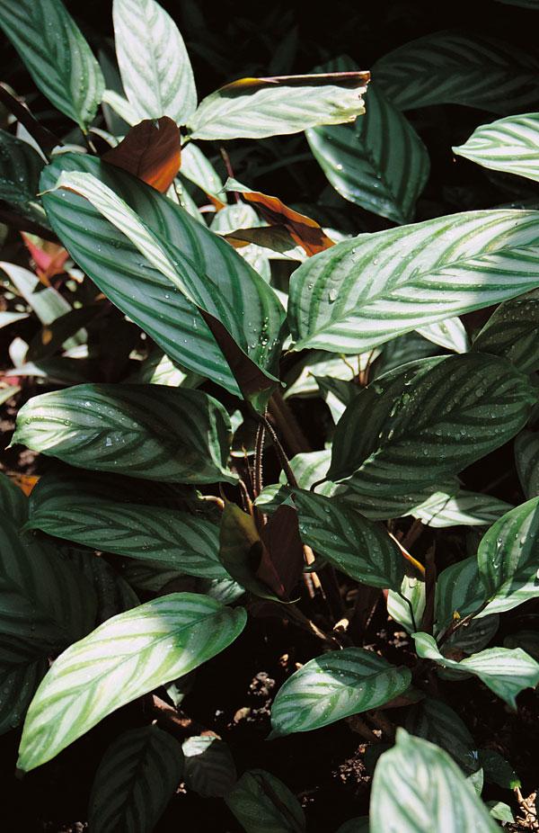 Tropické rastliny