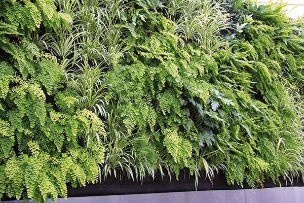 Rastliny možno pestovať aj všpeciálom systéme závesných kvetináčov umiestených vkovovom ráme. Výhodou je, že ak niektorá rastlina uhynie, kvetináč sa jednoducho vyberie arastlina nahradí.