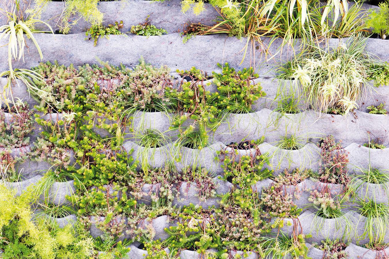 Jednou zmožností vytvorenia vertikálnej výsadby vexteriéri je využitie špeciálnej plsti, do ktorej sa vysádzajú jednotlivé rastliny.