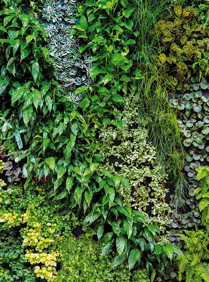 Popri jednodruhových zelených stenách môžete zvoliť aj zmiešanú výsadbu, ktorá bude kombinovať rastliny slistami rôznych tvarov vpestrej palete zelených odtieňov.