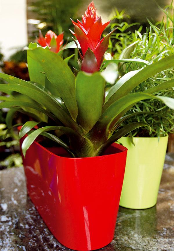 Naordinujte si 6 rastlín do obývačky!