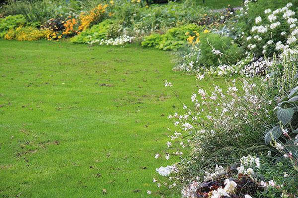 Jednou znajdôležitejších jesenných úloh je prihnojenie trávnika, na ktoré sa často zabúda. Práve to však výraznou mierou prispieva kvysokoreprezentatívnemu vzhľadu trávnika. Na trhu nájdete viacero typov vhodných hnojív, nikdy na tento účel nepoužívajte prípravok určený na hnojenie počas sezóny. Vplyvom jesenného prihnojenia trávnik získa vyššiu odolnosť, vyvinie sa mu kvalitný koreňový bal acelkovo bude pevnejší. Jesenné hnojivá neobsahujú toľko dusíka, ale najmä draslík ahorčík, čiže trávnik nebude mať prírastok zelenej hmoty. Tieto prípravky sa vyznačujú postupným uvoľňovaním živín, ateda pôsobia až do konca jesene (zhruba štyri mesiace). Aplikovať ich treba najneskôr do konca septembra.