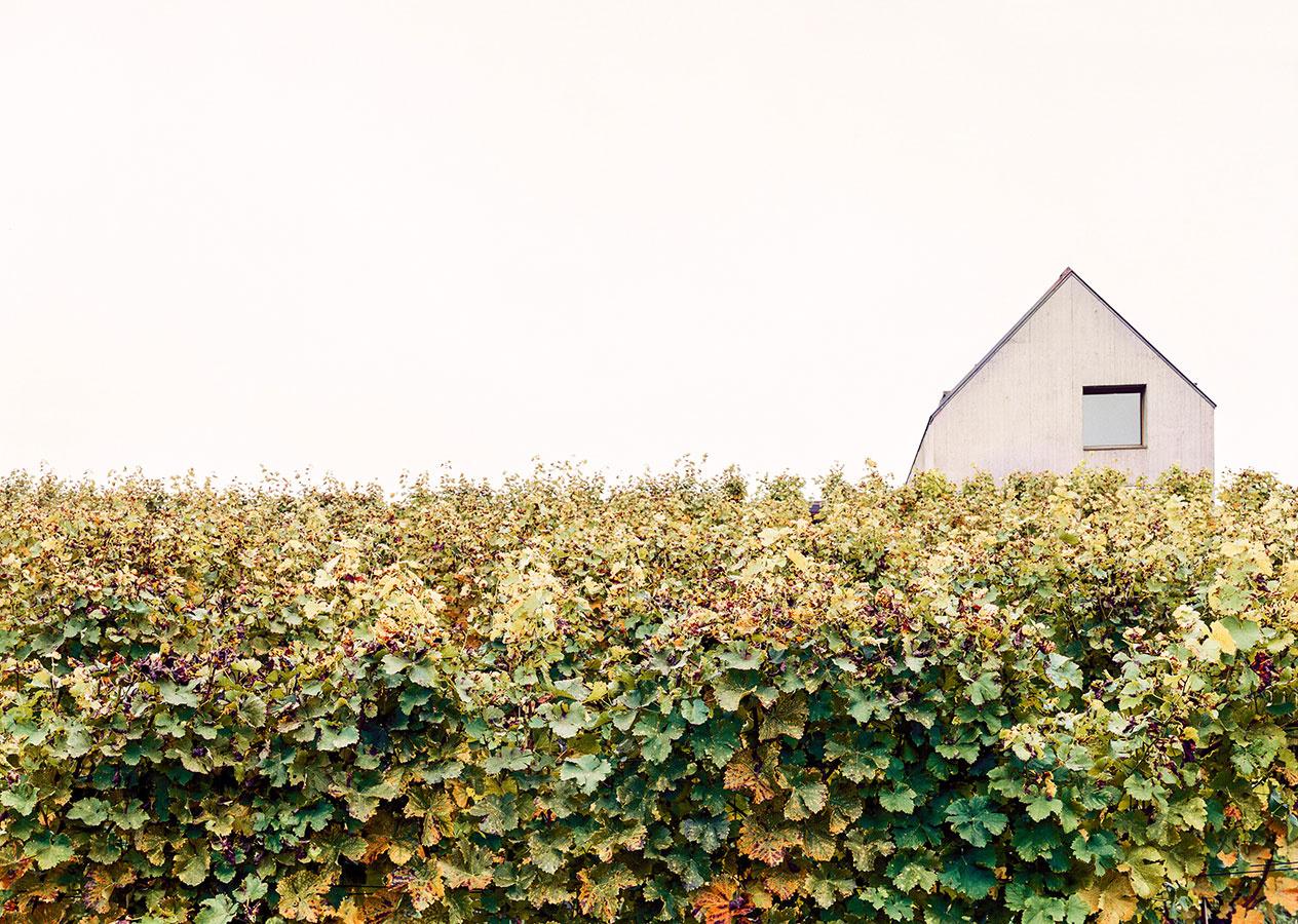 Ako si uctiť starý vinársky domček? Dvaja vinári našli riešenie!