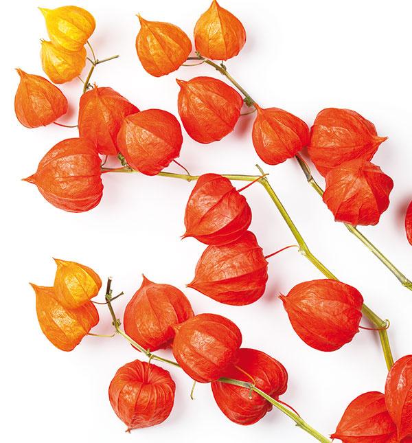 Odtiene žltej, oranžovej, bordovej a hnedej patria neodmysliteľne k jeseni. Do aranžmánov ich môžete vniesť aj vo forme listov alebo plodov rastlín. Príjemným akcentom môžu byť plody machovky (Physalis).