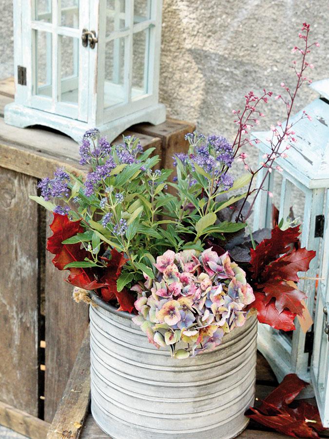 Odtiene ružovej a fialovej spolu vyzerajú nádherne. Bradavec (Caryopteris) a heucheru (Heuchera) môžete doplniť sušenou hortenziou (Hydrangea) a farbenými dubovými listami (Quercus).