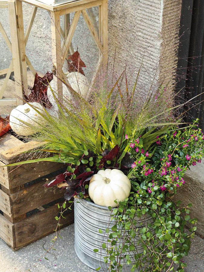 Aranžmánu, ktorý plánujete umiestniť pred vstup do domu, doprajte dostatočne veľkú nádobu a nepodceňte ani správne umiestenie rastlín – vyššie druhy patria do pozadia, nižšie, resp. prevísajúce rastliny zase do prednej časti aranžmánu. Súčasťou tejto výsadby je vyššia okrasná tráva milota (Eragrostis), stredne vysoká ružovo kvitnúca kufea (Cuphea), nízka heuchera (Heuchera) a prevísajúca milenbekia (Muehlenbeckia).