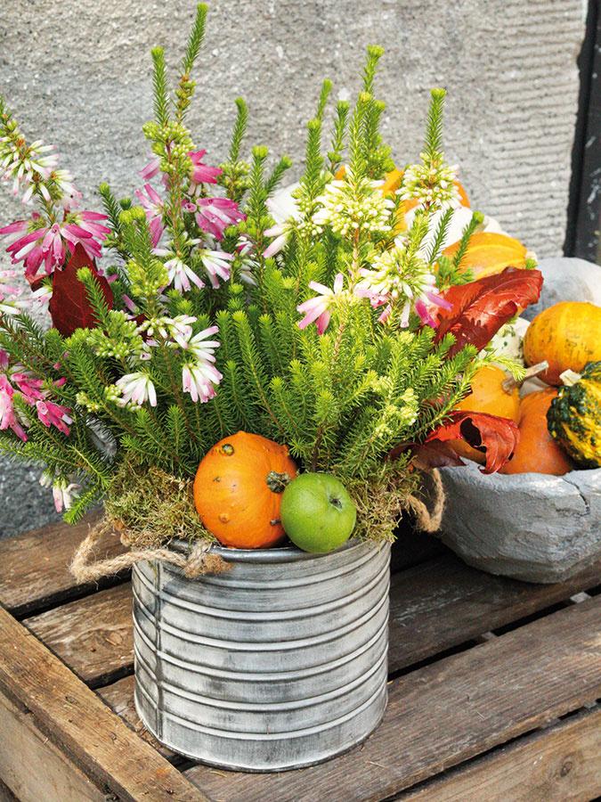 Erica verticillata predstavuje jeden z najkrajších vresovcov – prepája šťavnatú zelenú farbu s bielou a ružovou a zároveň je aj pomerne mohutná, vďaka čomu vynikne ako dekorácia stola na terase alebo súčasť väčšej výsadby. Doplniť ju môžete machom, listami a ozdobnými tekvičkami.