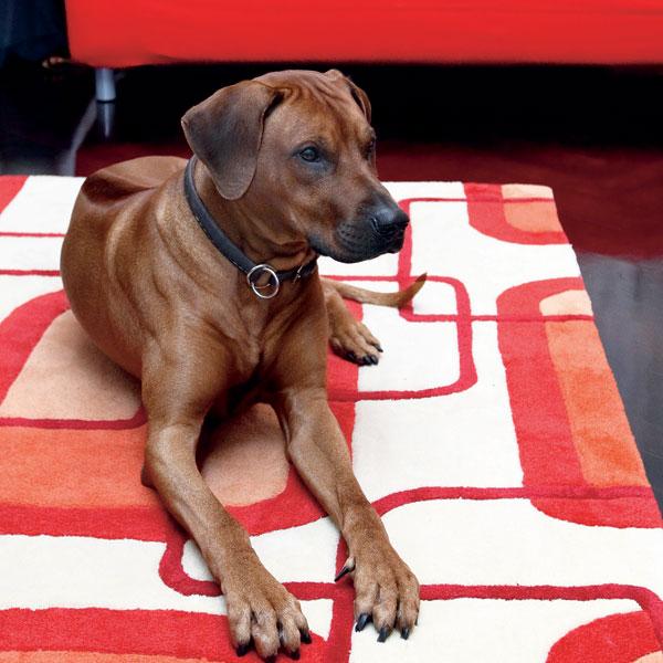 Psie a iné nábytkové potešenia