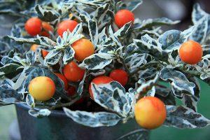 Ani v zime nemusí byť vaša záhrada bez života, stačí vybrať vhodné rastliny!