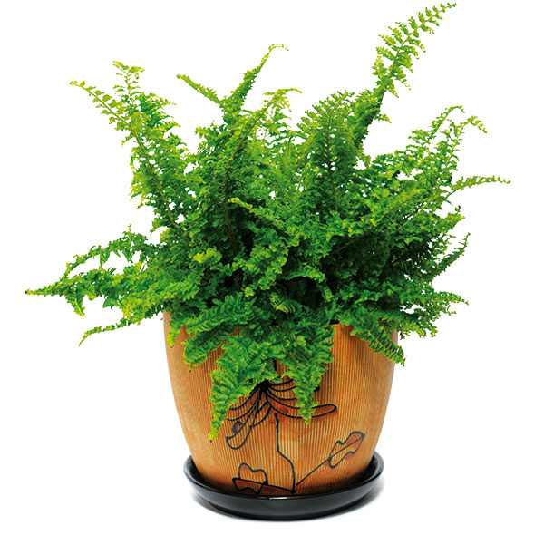 Aj vtom najmenšom priestore sa nájde miesto na zeleň. Rastlinky vyberajte sohľadom na ich pestovateľské podmienky apodmienky vášho bytu. Len tak budú prosperovať aplniť svoju úlohu.