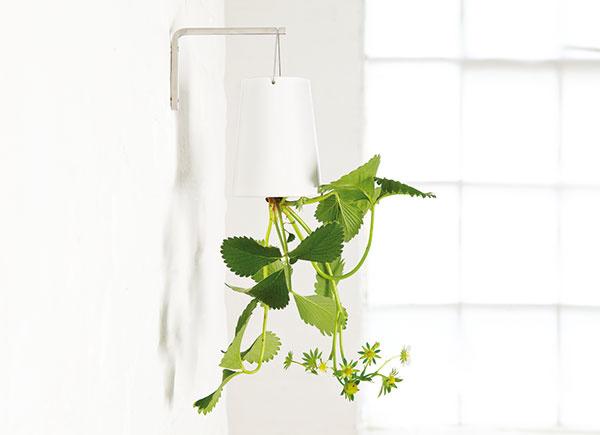 """Nápad kvetináčov otočených hore nohami skrsol zhlave novozélandského dizajnéraPatricka Morissa, ktorý sa snažil nájsť spôsob, ako účelne vytvoriť zelenú oázu aj vmalom byte. Svoj kvetináč pomenoval Sky Planter (výroca Boskke). Ako zelené """"svietidlá"""" možno pestovať nielen bylinky, ale aj iné izbové rastliny. 70 €, www.chooze.sk"""