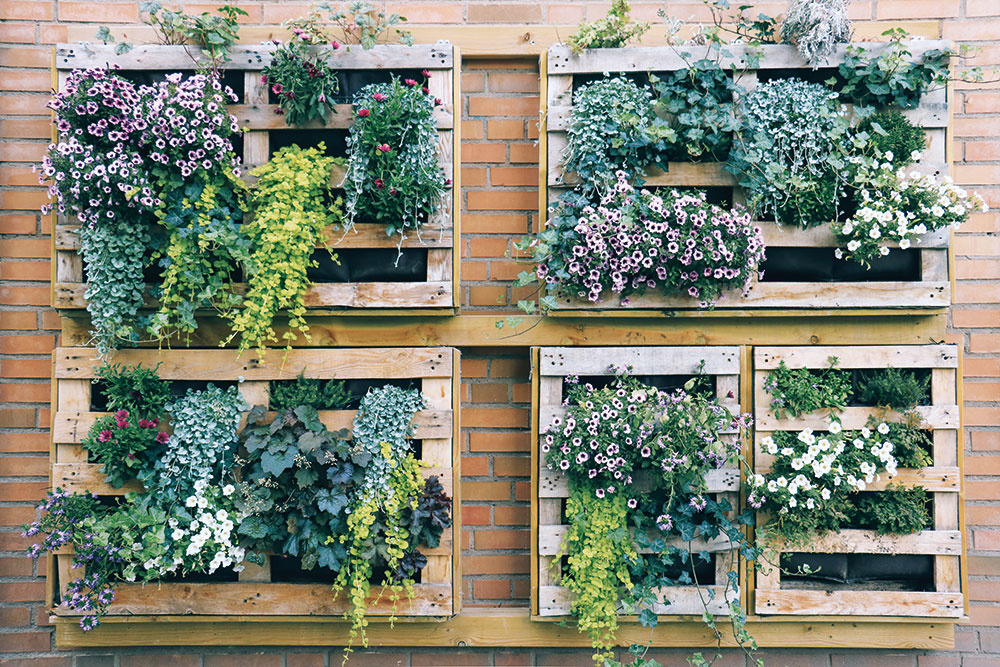 Rastliny, hlavne sezónneho charakteru, môžete pestovať aj netradičným spôsobom – vpaletách. Nezaberie to veľa miesta azáhrada získa zaujímavý pohľadový prvok. Výsadbu môžete každoročne meniť. Ak milujete bylinky, neváhajte!