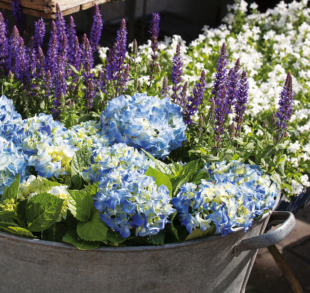 6 Bez črepníkov Staré hrnce, košíky či plechové vaničky sú vhodnou alternatívou, ak je nedostatok nádob na vysádzanie. Nakúpené rastliny do nich jednoducho zoskupte (aj bez vysádzania).