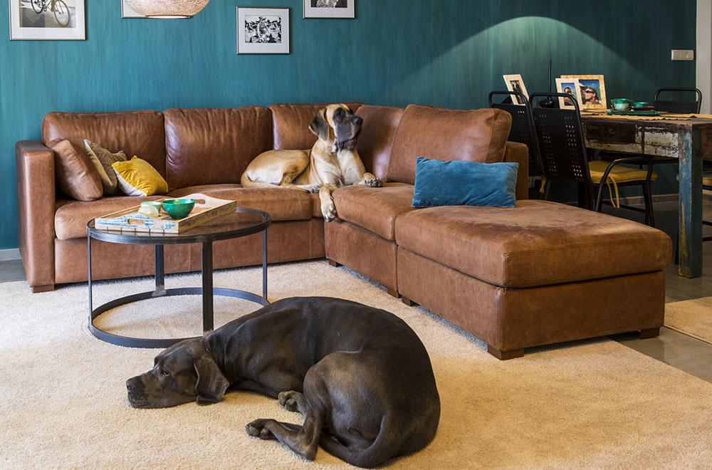 Mladá rodina s dieťaťom a psami spojila dva byty pre dve generácie