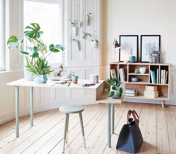 Ktoré rastliny sa hodia do moderných bytov a ako sa o ne starať?