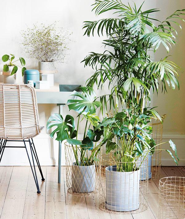 Aktuálnym trendom je vytváranie skupiniek rastlín s rôznymi typmi listov (rôzne veľkosti, štruktúry a odtiene zelenej). Rastliny v skupinke vždy vhodne výškovo usporiadajte – dominantnejšie druhy patria do pozadia. Atraktivitu tejto zostavy ešte zvýrazníte, ak zvolíte netradičné vegetačné nádoby.