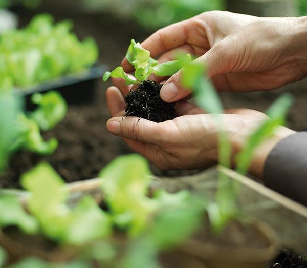 Ako prebrať záhradku zo zimného spánku? Začnite premýšľať, čo budete sadiť