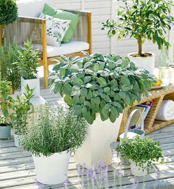 Balkónové záhradkárčenie prináša svoje ovocie