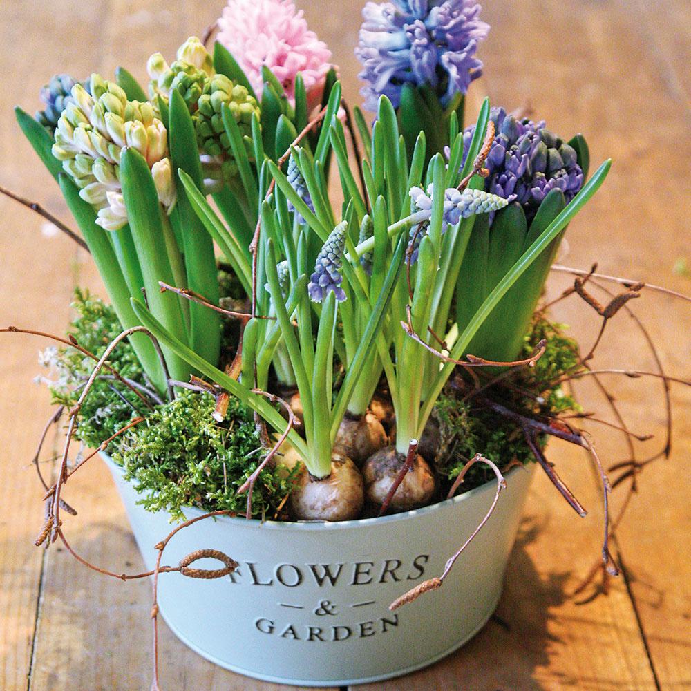 Spestrite si domácnosť krásnymi rozkvitnutými cibuľovinami